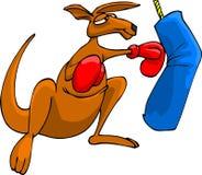 Boxing kangaroo Stock Images