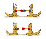 Boxing Kangaroo Set Stock Image