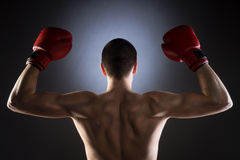 boxing La parte posteriore del combattente Colpo dello studio Fotografia Stock