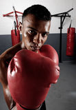 Boxing portrait Stock Image