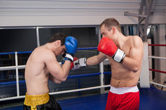 Boxing on ring. Stock Images