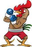 Boxing Rooster. Boxing rooster cartoon vector illustration Royalty Free Stock Photo