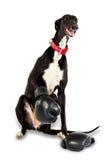 boxninghundhandskar Fotografering för Bildbyråer