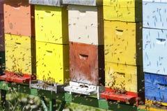 Boxses da colmeia Fotografia de Stock Royalty Free