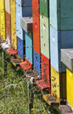 Boxses da colmeia Imagem de Stock Royalty Free