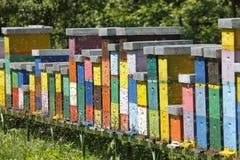 Boxses de la colmena Imagen de archivo libre de regalías