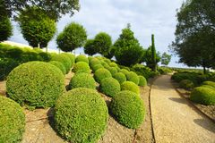 Boxwood in Amboise Stock Photos