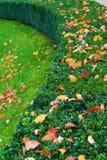 Boxwood bush with autumn leaves Royalty Free Stock Photos