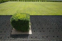 A boxwood bush planted near a lawn Royalty Free Stock Photography