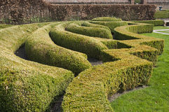 Boxwood or Buxus hedges. Cut in nice shapes, with hornbeam at background Royalty Free Stock Image