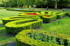 Boxwood in city park Stock Images