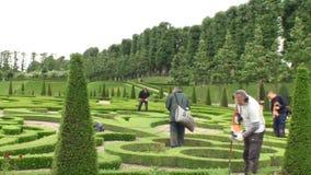 Boxwood garden maintenance. Maintenance of a boxwood garden at Frederiksborg Palace, Denmark stock video footage
