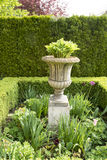Boxwood hedge with amphora Stock Image