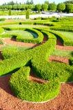 Boxwood krzaki ornamentacyjny ogród Rundale królewski w Latvia Zdjęcie Royalty Free