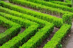 Boxwood ornamental cut in a garden. Portuguese island of Madeira royalty free stock photography