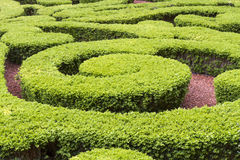 Boxwood in a park Royalty Free Stock Photography