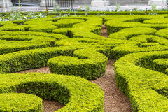 Boxwood in a park Royalty Free Stock Photos