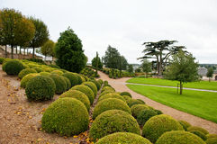 Boxwood rows and lebanon cedar in Amboise garden Stock Images