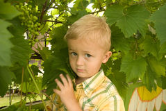 The boy. The boy in a garden, a portrait Royalty Free Stock Photo