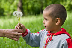 The boy. In a wood on a glade with dandelions Royalty Free Stock Image