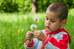 The boy. In a wood on a glade with dandelions Royalty Free Stock Images