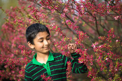 Boy Admiring Spring Flowers Stock Image
