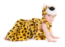 Boy at the age of 7 months weared like tiger Royalty Free Stock Photography