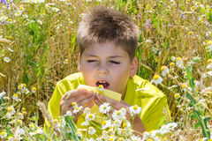 Boy with allergic rhinitis in  meadow Royalty Free Stock Images