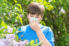 Boy with allergic rhinitis near blossoming lilac Stock Image