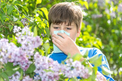 Boy with allergic rhinitis near blossoming lilac. Teen boy with allergic rhinitis near blossoming lilac royalty free stock image