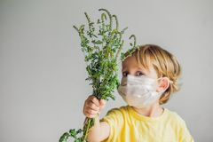 The boy is allergic to ragweed. In a medical mask, he holds a ragweed bush in his hands. Allergy to ambrosia concept.  royalty free stock images