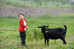 Boy And Black Goat Stock Photo