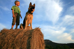 Boy And Dog By Summer Stock Photo
