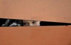 Free Boy And Dog Hidden In A Box Stock Photos - 65470623