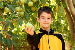 Boy with apple. Boy holding (offering) an apple in a a fruit garden outdoor stock photography