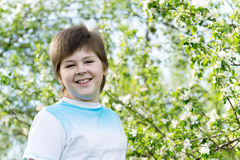 Boy at the apple blossom in the spring garden Stock Photos