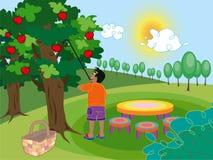Boy in apple farm. Cartoon illustration Royalty Free Stock Photo