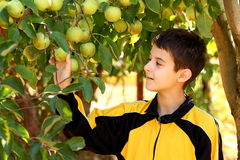 Boy in apple garden Royalty Free Stock Photography