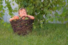 Boy with an apple in hand sitting in the basket on green grass. Smiling kid in the basket with grape vine on background stock photography