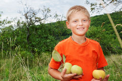 Boy with apples in the garden. Stock Photo
