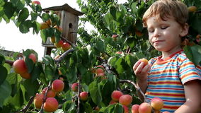 Boy and Apricot Royalty Free Stock Photo