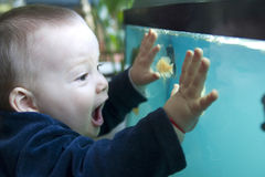 Boy and aquarium. A little boy fascinated by sea creatures in the aquarium stock photo