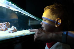 Boy at aquarium Royalty Free Stock Photos