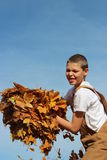 Boy Armful of Leaves Royalty Free Stock Photo