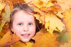 Boy and autumn Royalty Free Stock Photography