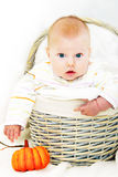 Boy and autumn basket Royalty Free Stock Images