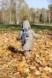 Boy in autumn park walks royalty free stock photography