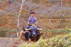 Boy from the Bac Ha village  rides on a buffalo Royalty Free Stock Photo