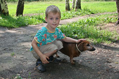 Boy with badgerdog Stock Image