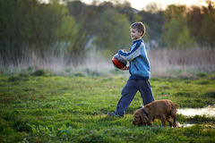 Boy with a ball walking dog Stock Images